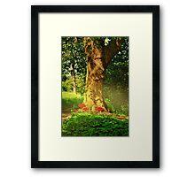 Natures Solitude Framed Print