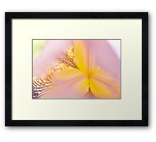 Macro Iris close up Framed Print