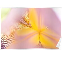 Macro Iris close up Poster
