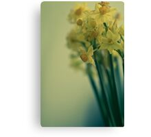 Bunch of narcissi standing tall Canvas Print