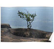 Tree - British Columbia Canada  Poster