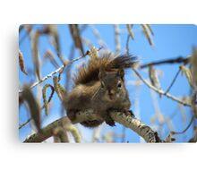 Squirrels - British Columbia Canada Canvas Print