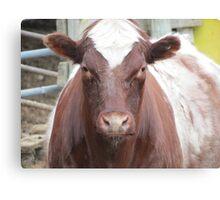 Farm Cow - British Columbia Canada Canvas Print