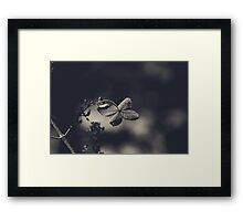 That Special Warmth Framed Print
