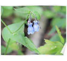 Blue Bells - British Columbia Canada Poster