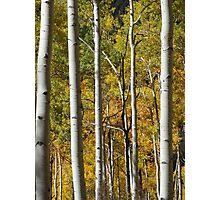 Colorado Colors Photographic Print