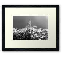 Light Breeze Framed Print