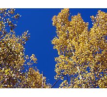 Blue and Yellow Beauty Photographic Print