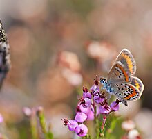 Colorful butterfly by César Torres