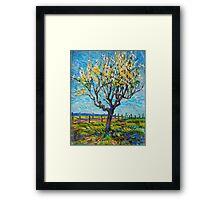 Apricot Tree Framed Print