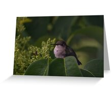 Female hummingbird takes a break Greeting Card