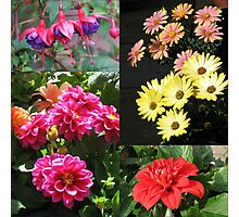 Flowers of Summer Collage Photographic Print