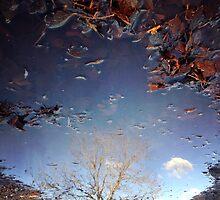 Puddles in the sky by Jennifer Kutzleb