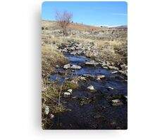 Creek in the Desert,Reno Nevada USA Canvas Print