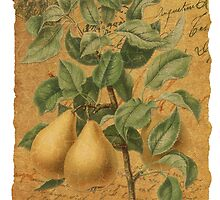 Vintage Pears & Ephemera Collage Design - Vintage Look Greeting Card - Pears by traciv