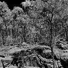 On Mt Kaputar, Narrabri by Elizabeth McPhee
