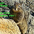 """""""Nuts About You"""" by Gail Jones"""