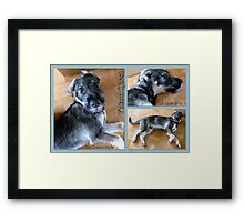 Yukon Quest Framed Print