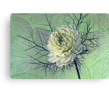love-in-a-mist Canvas Print
