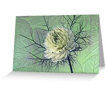 love-in-a-mist Greeting Card