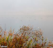 Duck on the pond in the mist by DPalmer