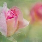 rosebuds by Teresa Pople