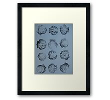 Shells in black and white -pen and wash Framed Print