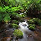 A gentile flow by Donovan Wilson