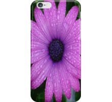 Purple African Daisy with Raindrops iPhone Case/Skin
