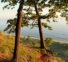 Lake Michigan Through The Trees by BarbL