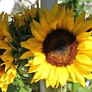 sunflower bouquet  by Tim Horton