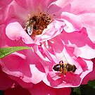1693-insects on the rose by elvira1