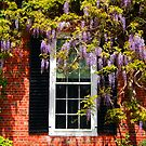 Wisteria at the Window by Linda  Makiej