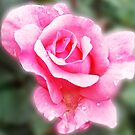 1708-beautiful rose by elvira1