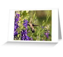 Hummingbird in Larkspur Greeting Card