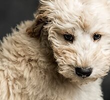 A Puppy by Peter O'Hara