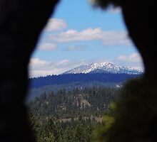 Knot Hole View by BettyEDuncan