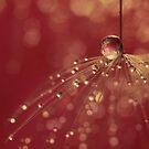 Raspberry Shower by Sharon Johnstone