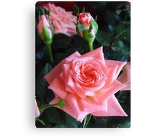 Mothers Day Roses On Display Canvas Print