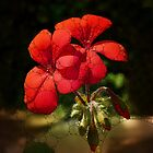 A Percolated Geranium by Rivendell7