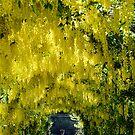 Laburnum Arch by Carol Bleasdale
