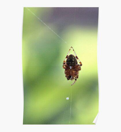 Spider on Silk Poster