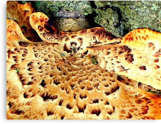 Fungi by Dawn M. Becker