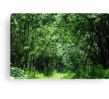 canopy Of Trees - British Columbia Canada Canvas Print