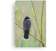 Eastern Kingbird Enjoying the Rain. Canvas Print