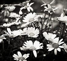 Spring flowers get rain showers by jandgcc