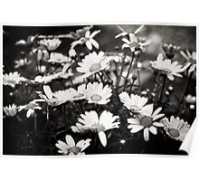 Spring flowers get rain showers Poster