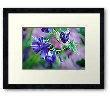 headfirst bumblebee Framed Print