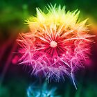 Rainbow Dandelion by Melissa Park
