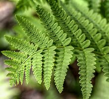 Fern V by EelhsaM